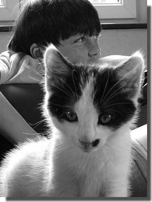Eclipse, petit chat de 2 mois