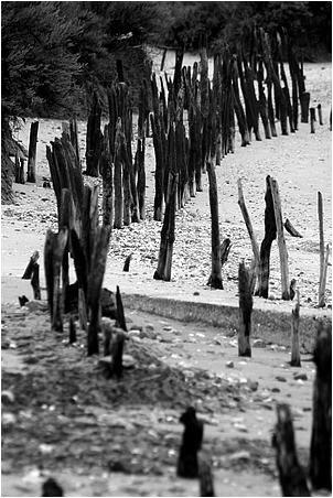 alignement de poteaux plantés dans le sable